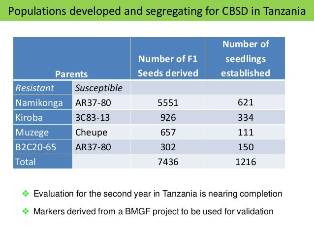 Frequency distribution for CBSD in 4 mapping populations 0 20 40 60 80 100 120 1 2 3 4 5 Muzege x Cheupe CBSD 6 MAP 0 20 4...