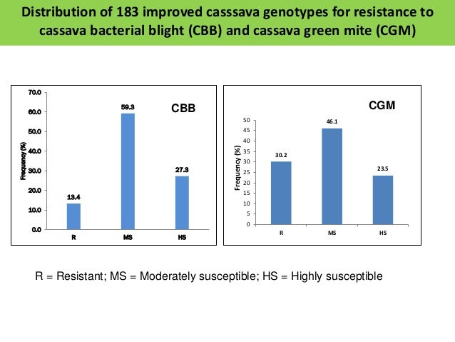 NRCRI germplasm CBB score CGM score IITA germplasm CBB score CGM score NR/8010 1 1 188/023543 1 1 74/2 1 2 189/00748 1 1 7...