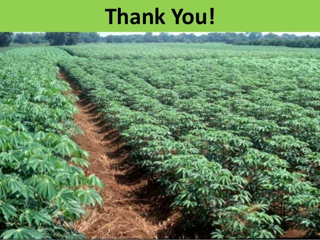 GRM 2013: Improving and deploying markers for biotic stresses in cassava -- C Egesi