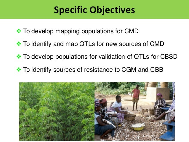  To develop mapping populations for CMD  To identify and map QTLs for new sources of CMD  To develop populations for va...