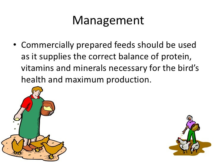 Management<br />Commercially prepared feeds should be used as it supplies the correct balance of protein, vitamins and min...