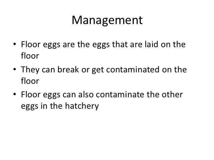 Management <br />Floor eggs are the eggs that are laid on the floor<br />They can break or get contaminated on the floor <...