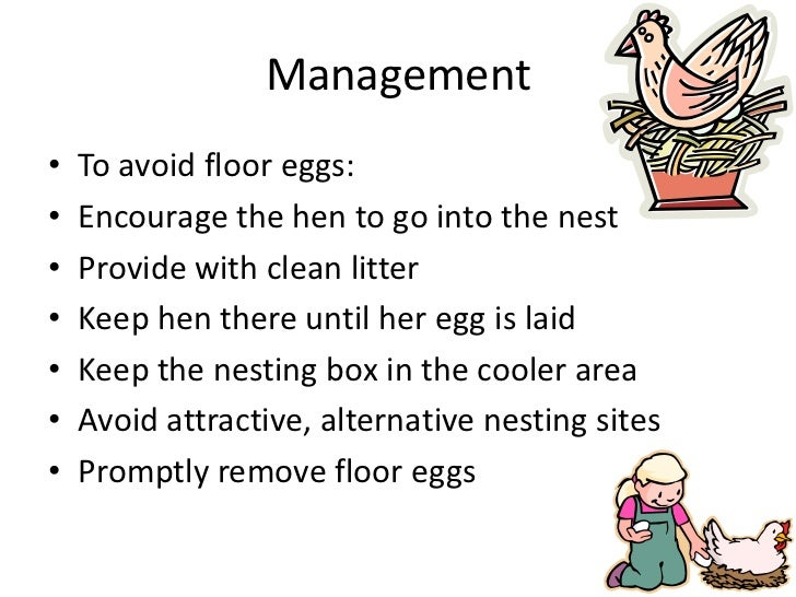 Management<br />To avoid floor eggs:<br />Encourage the hen to go into the nest<br />Provide with clean litter<br />Keep h...