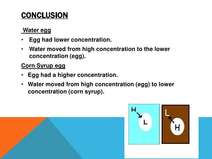 Egg Osmosis Experiment kit