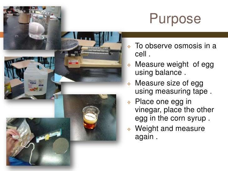 Nicole's Egg Osmosis Experiment