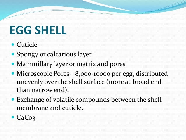 eggshell composition