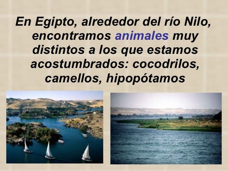 En Egipto, alrededor del río Nilo,  encontramos  animales  muy distintos a los que estamos acostumbrados: cocodrilos, came...