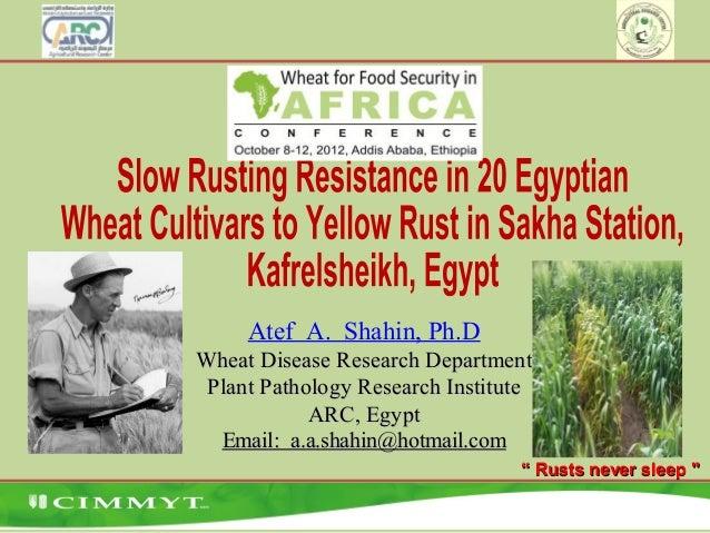 Atef A. Shahin, Ph.D Wheat Disease Research DepartmentWheat Disease Research Department Plant Pathology Research Institute...