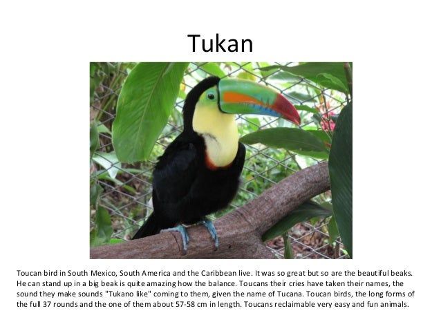 TukanToucan bird in South Mexico, South America and the Caribbean live. It was so great but so are the beautiful beaks.He ...