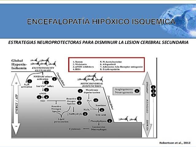 • Eritropoyetina  – Hormona glicoproteica  – eritropoyesis  – Se incrementa  naturalmente durante la  hipoxia y la isquemi...