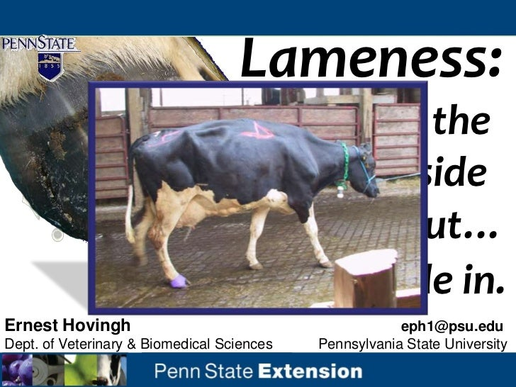 Lameness:                             from the                                inside                                 out… ...