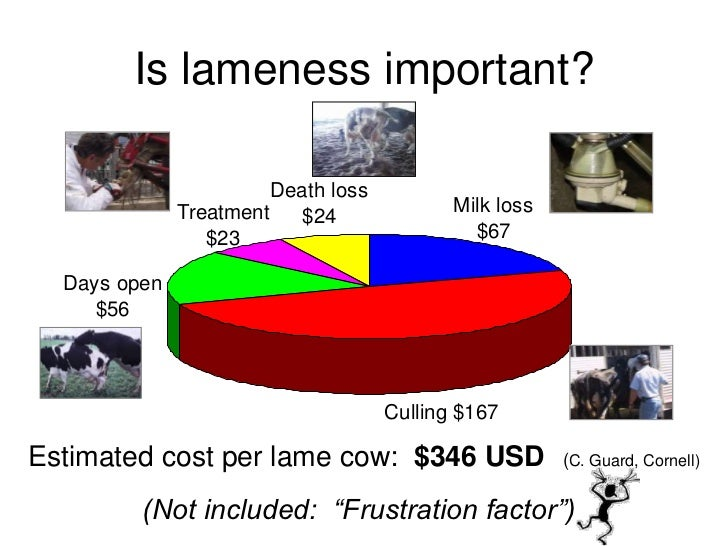 Lameness Hoof And Leg Issues In Dairy Cattle Ernest Hovingh