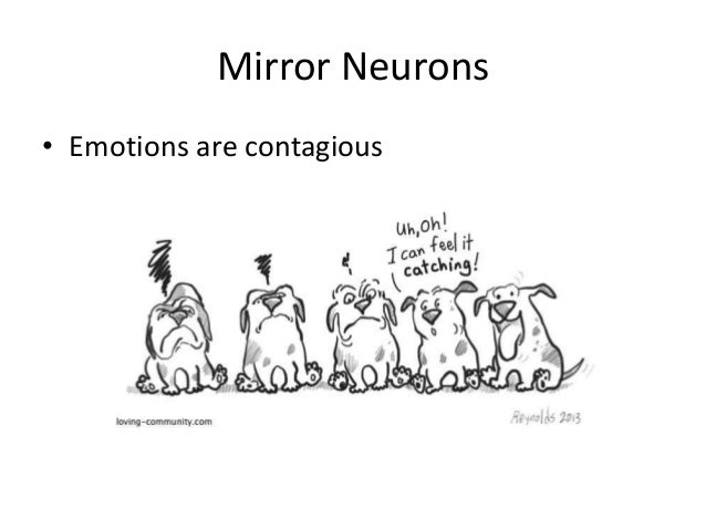 Emotional intelligence understanding emotional resonance for Mirror neurons psychology definition