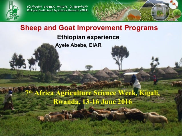 Sheep and Goat Improvement Programs Ethiopian experience Ayele Abebe, EIAR 7th Africa Agriculture Science Week, Kigali, Rw...