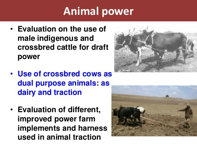 Animal power• Evaluation on the use of  male indigenous and  crossbred cattle for draft  power• Use of crossbred cows as  ...