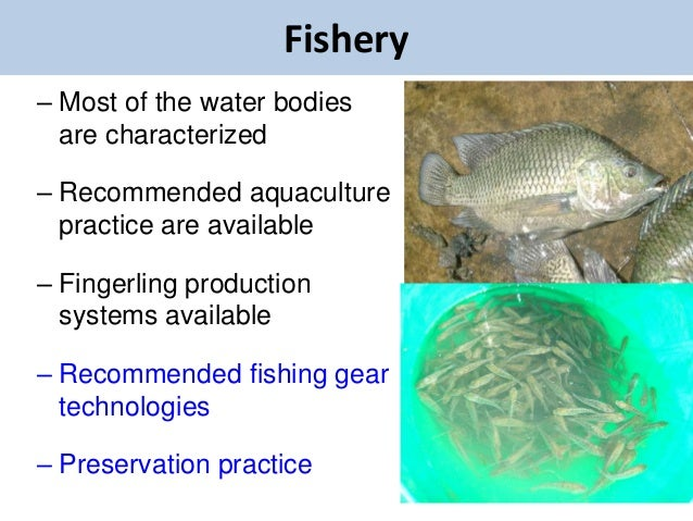 Fishery– Most of the water bodies  are characterized– Recommended aquaculture  practice are available– Fingerling producti...