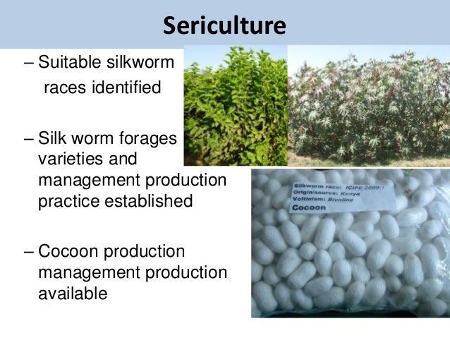 Sericulture– Suitable silkworm  races identified– Silk worm forages  varieties and  management production  practice establ...
