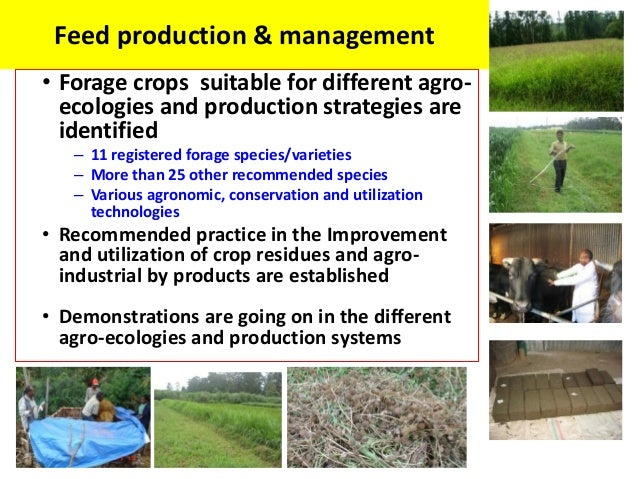 Feed production & management• Forage crops suitable for different agro-  ecologies and production strategies are  identifi...