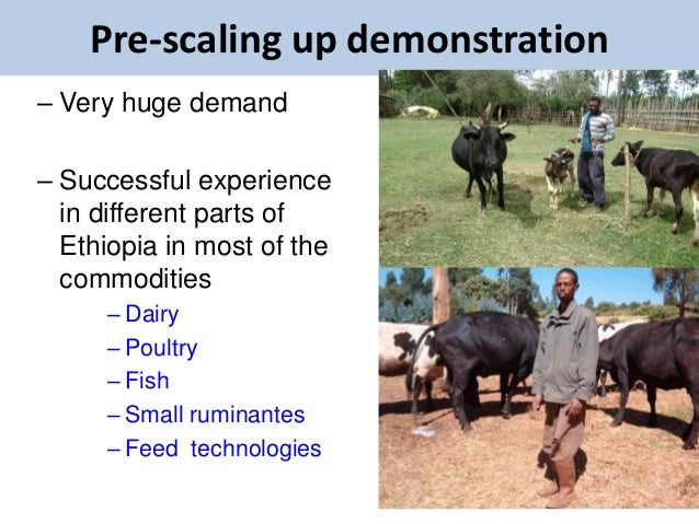 Pre-scaling up demonstration– Very huge demand– Successful experience  in different parts of  Ethiopia in most of the  com...
