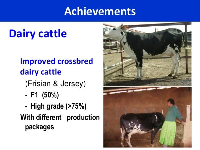 AchievementsDairy cattle  Improved crossbred  dairy cattle   (Frisian & Jersey)   - F1 (50%)   - High grade (>75%)  With d...