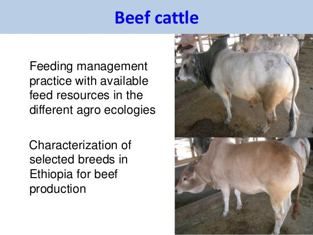 Beef cattleFeeding managementpractice with availablefeed resources in thedifferent agro ecologiesCharacterization ofselect...