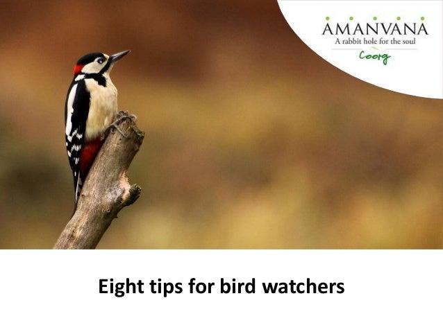 Eight tips for bird watchers