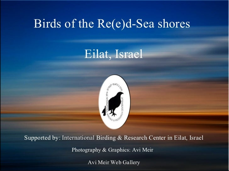 Birds of the Re(e)d-Sea shores                       Eilat, IsraelSupported by: International Birding & Research Center in...