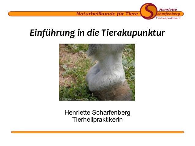 Einführung in die Tierakupunktur  Foto: Christine Braun / FNT e. V.  Henriette Scharfenberg Tierheilpraktikerin