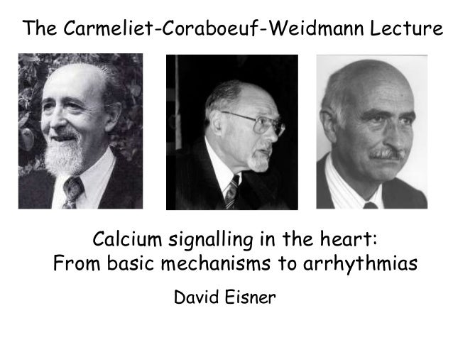 The Carmeliet-Coraboeuf-Weidmann Lecture  Calcium signalling in the heart: From basic mechanisms to arrhythmias David Eisn...