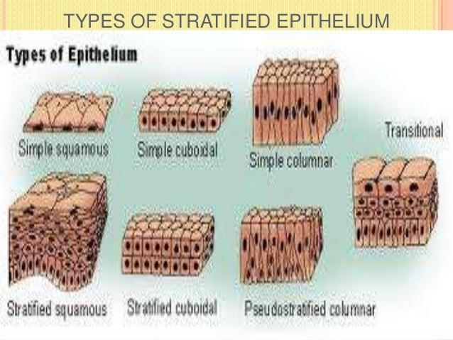 TYPES OF STRATIFIED EPITHELIUM