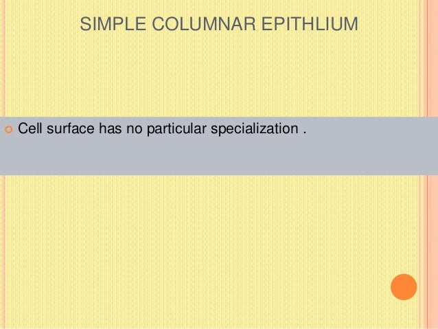 SIMPLE COLUMNAR EPITHLIUM  Cell surface has no particular specialization .