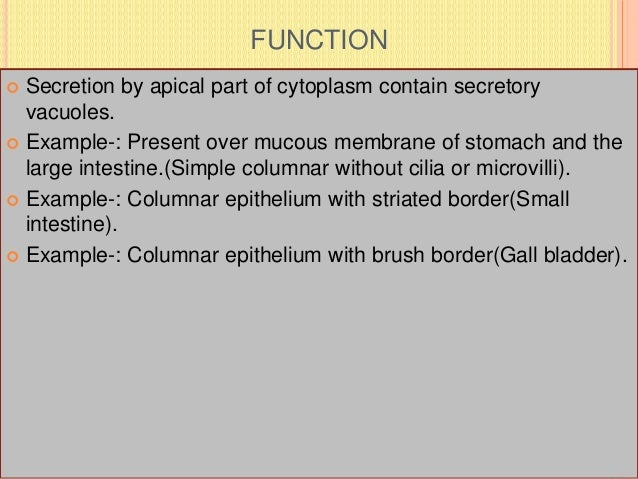 FUNCTION  Secretion by apical part of cytoplasm contain secretory vacuoles.  Example-: Present over mucous membrane of s...