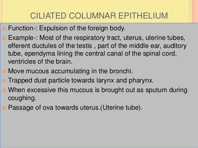 CILIATED COLUMNAR EPITHELIUM  Function-: Expulsion of the foreign body.  Example-: Most of the respiratory tract, uterus...