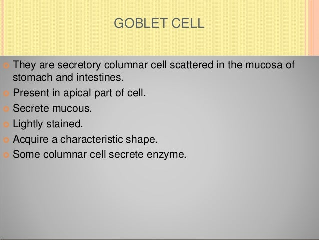 GOBLET CELL  They are secretory columnar cell scattered in the mucosa of stomach and intestines.  Present in apical part...