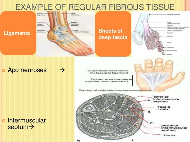 RETICULAR TISSUE  Made up of reticular fibres.  In many situations(e.g. lymph nodes, glands) these fibres form supportin...