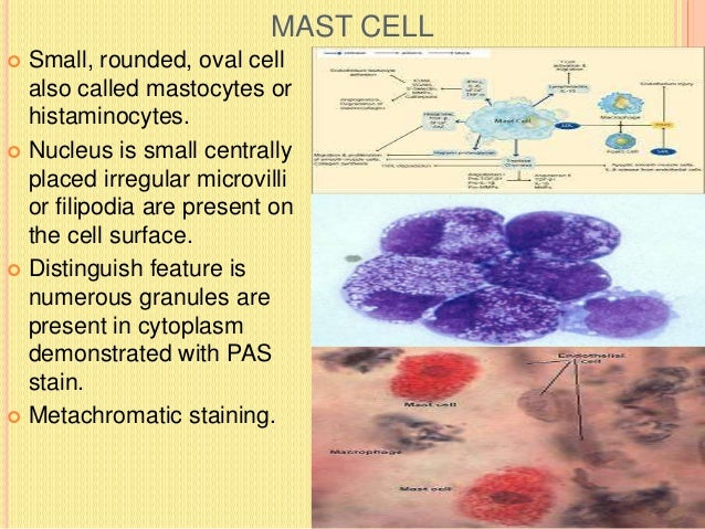 EOSINOPHILS AND PLASMA CELLS  EOSINOPHILS-:So called because of presence of eosinophilic granules in the cytoplasm.  Inc...