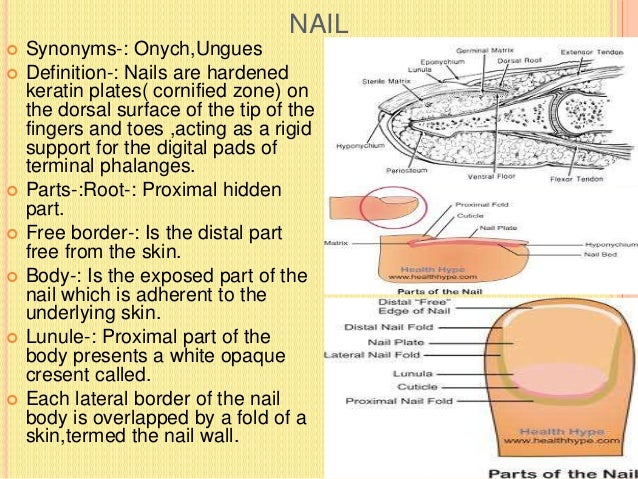 CLINICAL ANATOMY OF THE NAIL  Anaemia(Nails are pale and white)  Koilonychias-: In iron deficiency anaemia nails are thi...