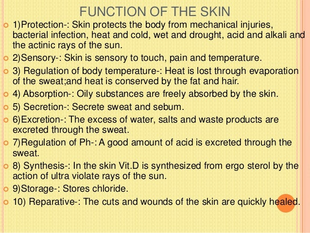 SUPERFICIAL FASCIA  Definition-: Is a general coating of the body beneath the skin made up of loose areolar tissue with v...