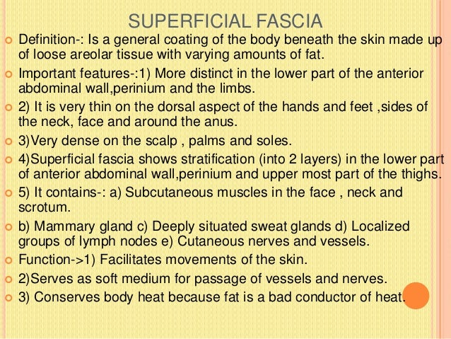 IMPORTANT FEATURES  1) Extensions(prolongations) of the deep fascia form:  a) The inter muscular septa which divide the ...