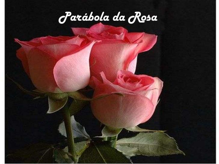 Parábola da Rosa<br />Parábolada Rosa<br />