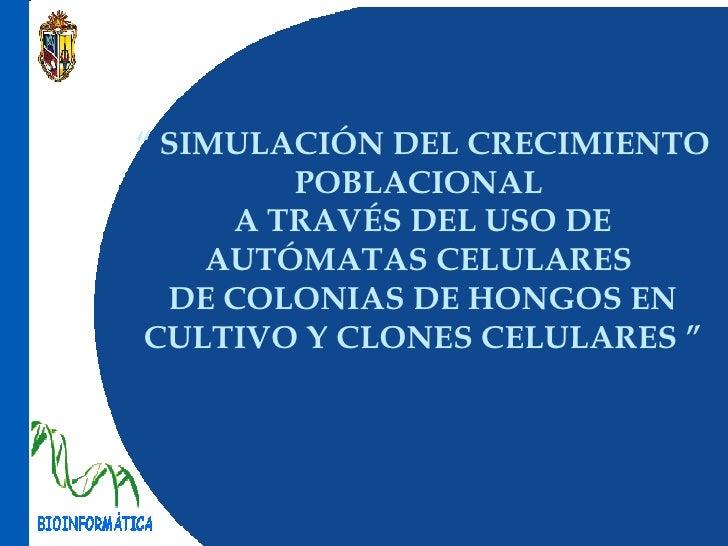 """""""   SIMULACIÓN DEL CRECIMIENTO POBLACIONAL  A TRAVÉS DEL USO DE AUTÓMATAS CELULARES  DE COLONIAS DE HONGOS EN  CULTIVO  Y ..."""