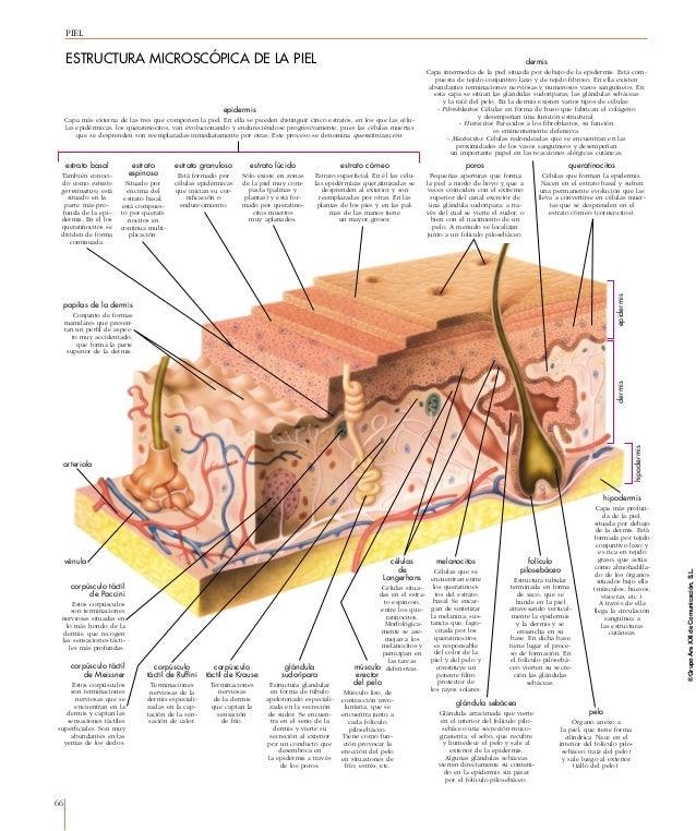 Estructuras del cuerpo humano