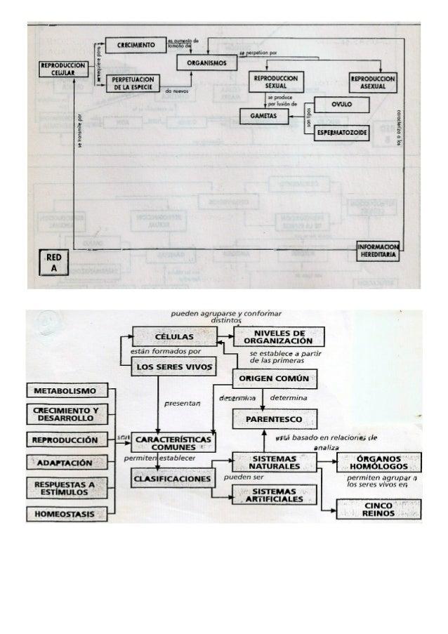 Ejemplos de mapas conceptuales Slide 3