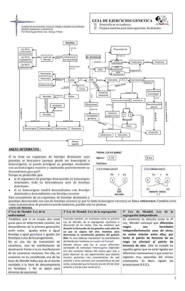 GUIA DE EJERCICIOS GENETICADesarrolla en tu cuadernoPrepara materias para interrogaciones, biodictados596455511...