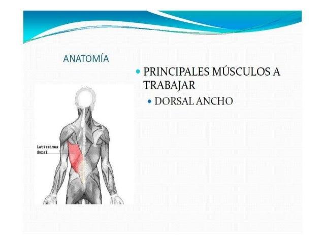 Ejercicios de musculación para la espalda