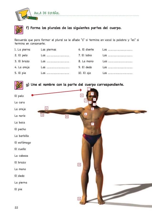 Ejercicios el cuerpo humano