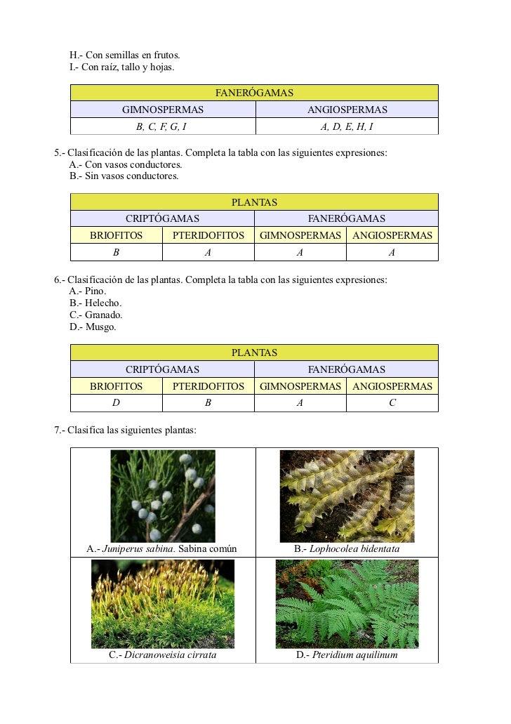 Juniperus phoenicea reproduccion asexual de las plantas