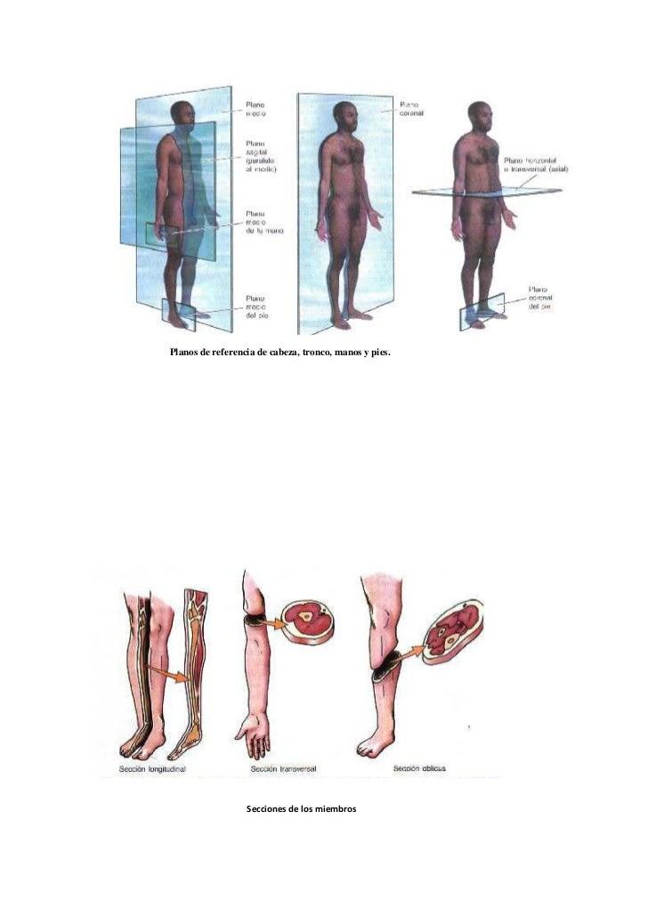 Ejes y referencias anatómicas