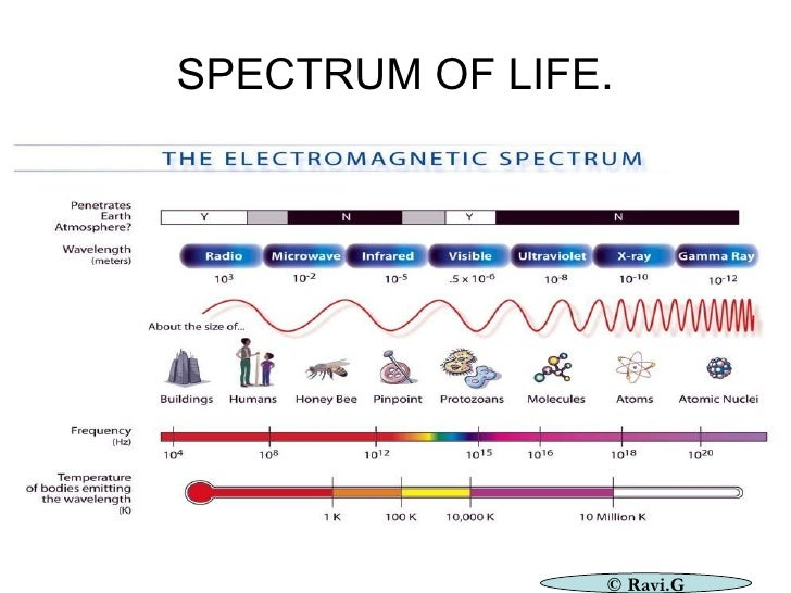 SPECTRUM OF LIFE . © Ravi.G
