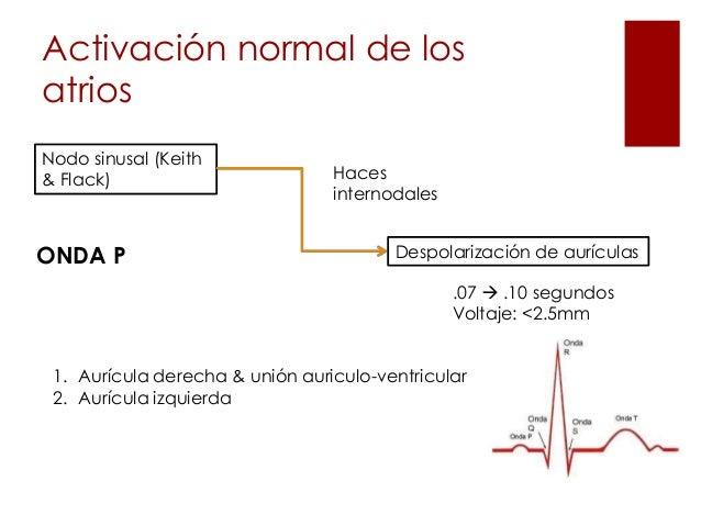 Ekg normal Slide 3